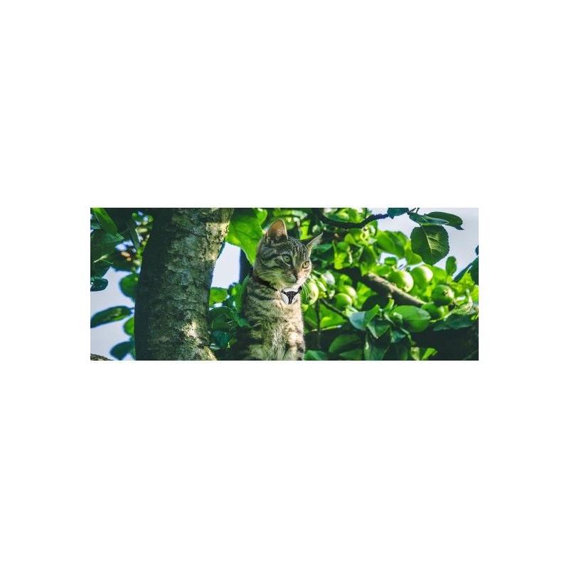 PETCAM EYENIMAL kamera háziállatoknak