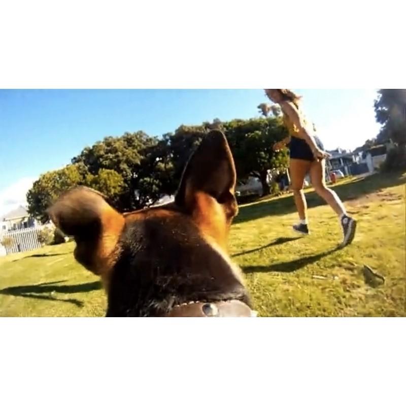 HD kamera kutyának Pet Cam